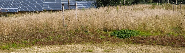 Zonnepark Klarenbeek, zicht vanuit een van de paddenpoelen